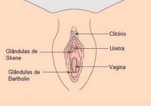 Squirting x Ejaculação Feminina